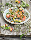 Crab apples and clematis seed heads on plate on garden table
