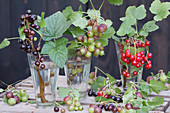 Stachelbeeren und rote und schwarze Johannisbeeren in Gläsern