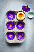 Violette Blüten und ein aufgeschlagenes weichgekochtes Ei in Eierkarton (Aufsicht)