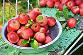Rote Äpfel frisch gepflückt in einer Schüssel auf einer Gartenbank