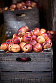 Nectarines in a Crate