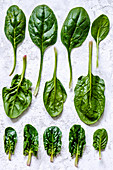 Spinach leaves of different shapes and sizes on a concrete background