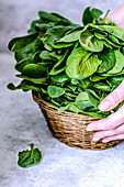 Basket with spinach in the hands on a concrete background