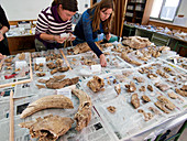 Fossil analysis at Neanderthal excavation site