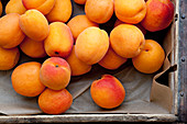 Apricots (filling the image)