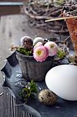Kleiner Topf mit Blüten von Tausendschön und Wachteleiern