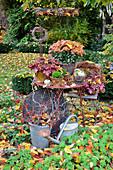 Herbst-Arrangement mit Chrysantheme und Stauden im Garten
