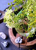 Samenstand vom Fenchel mit Hortensienblüte