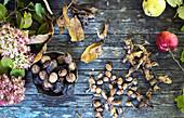 Herbstliches Stillleben mit Nüssen, Obst und Blüten (Aufsicht)