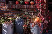 Herbst-Arrangement mit großen Zinkkübeln, wildem Wein und Kürbis