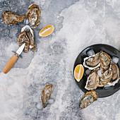 Austern mit Austernmesser und Zitronenspalten (Aufsicht)