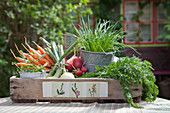 Vegetables on wooden tray decorated with floral motif made from old crate
