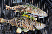 Grilled bass with herbs on a grill (seen from above)