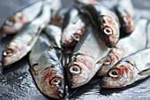 Fresh herring