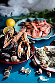 Various crustaceans and clams