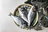 Raw uncooked gutted sea bream or dorado fish on ceramic plate with ice and old sea fishing nets and shells