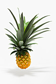 A floating pineapple against a white background