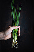 A bunch of Asian spring onions