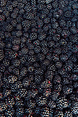 A pile of fresh blackberries