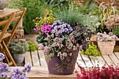 Herbstlich bepflanzter Topf mit Fetthenne, Aster, Alpenveilchen, Blauschwingel und Purpurglöckchen