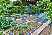 Gemüsegarten mit blau eingefaßten Beeten und Rankgerüsten