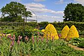 Garten mit Schwertlilien, Formschnittgehölzen und Rose
