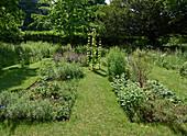 Heilpflanzen und Kräuter Garten mit Rasenwegen zwischen den Beeten