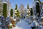 Verschneiter Weg zwischen Säulen-Eiben, Scheinzypressen und Sträuchern
