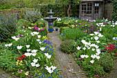 Frühlingsbeete mit weißen Tulpen
