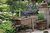 Alte Schubkarre als Dekoration am Terrassenbeet mit Schneeball und Katzenminze