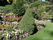 Hanggarten mit Zuckerhutfichte