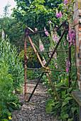 Fingerhut am geöffneten Gartentor