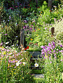 Naturgarten mit bunten Blumen