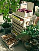 Äpfel lagern im Obstregal, Korb mit Kartoffeln