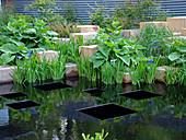 Teichgestaltung mit Japan-Iris, Steinblöcken und schwarzen Quadraten
