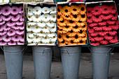 Gerbera Schnittblumen in Farben