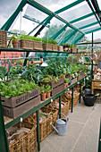 Gemüse im Gewächshaus in Kisten und Körben ziehen
