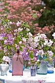 Blütenzweige von Apfelbaum und Flieder in Glasflaschen