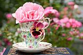 Blüte von Rose 'Queen Elizabeth' und Stiefmütterchen in Teetassen