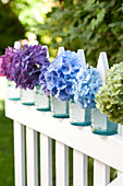 Hortensienblüten farblich aufgereiht in Gläsern am Zaun
