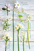 Blüten - Tableau