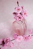 Blütenzweige von gefüllter Blutpflaume