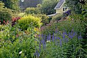 Staudenbeet im Cottage Garten mit Ehrenpreis, Kugeldistel und Wasserdost