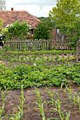 Bauerngarten mit Gemüse im Mai