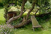 Sitzplatz unter liegendem Apfelbaum