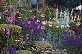 Blühendes Beet mit Steppen-Salbei, Sterndolde, Lilien, Königskerze, Rosen und Buchs