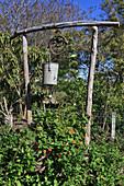 Schwarzäugige Susanne im Beet mit Gartenkunst