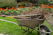 Schubkarre mit Rückschnittmaterial und Gartengeräten