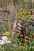 Schafgarbe, Ringelblumen, Fingerhut und Edelweißmargerite