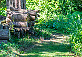 Brennholzstapel am Waldweg